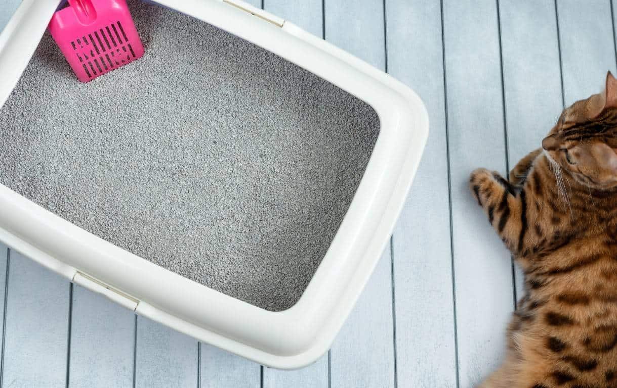 ארגז חול לחתול