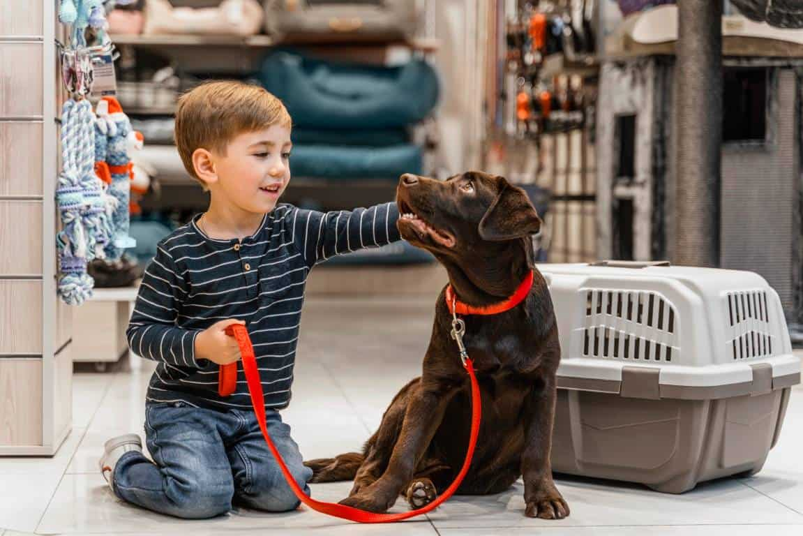 ציוד לכלבים